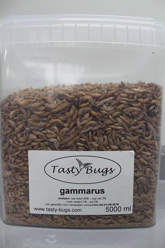 gammarus 5000ml